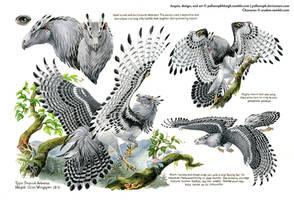 Custom Aequis: Tropical Harpy by pallanoph