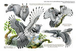 Custom Aequis: Tropical Harpy