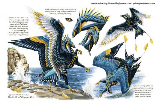 Custom Aequis: Ornate Kingfisher