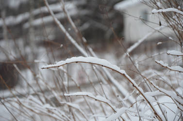 more sticks in snow by wiak