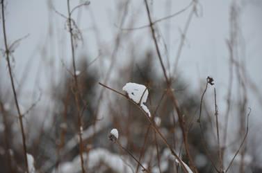 snowy stick by wiak