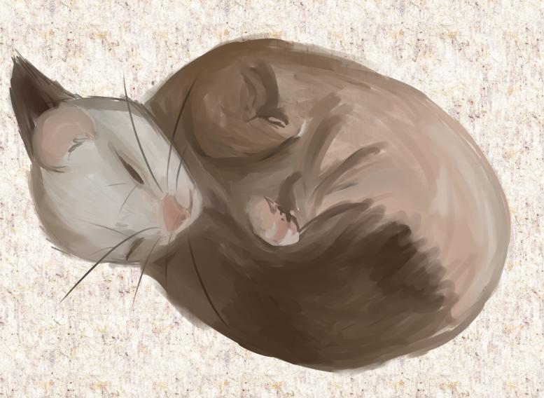 Ferret Practice by savvybo