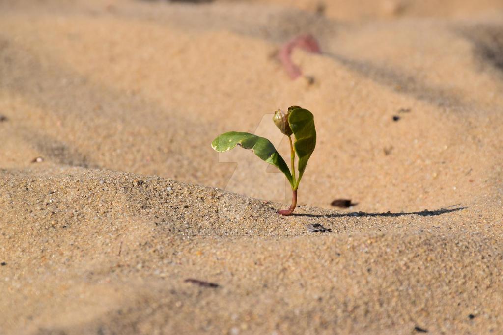 Desert by Makoname
