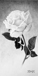 White-Rose