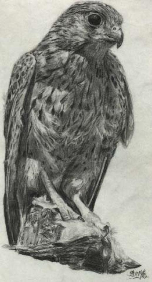 Pencil sketch of eagle by chaseroflight