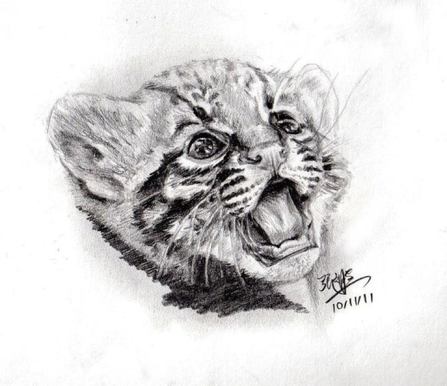 Pencil sketch of cute tiger cub by chaseroflight
