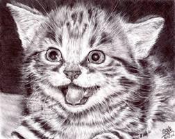 PEN drawing of a kitten by chaseroflight