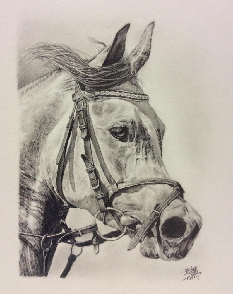 Pencil drawing of an Arab horse by chaseroflight