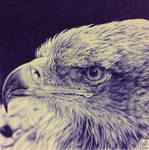 Ballpoint pen drawing of an eagle