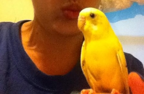 My budgie by MYxPassionxKTG