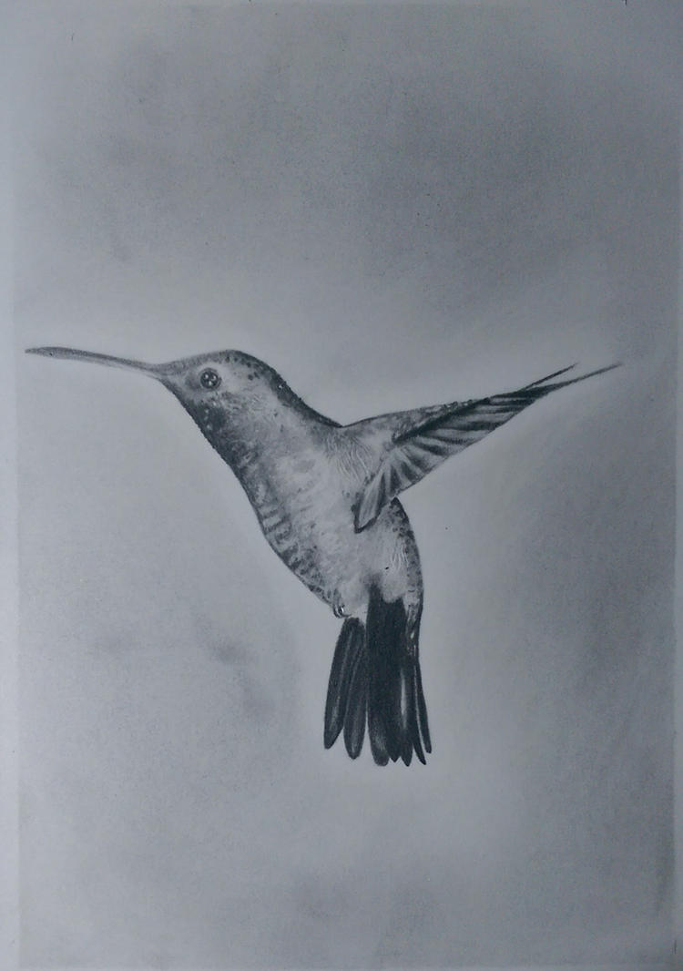 Hummingbird by JuanSRE