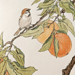 Sparrow and oranges