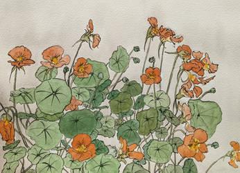Quick study of nasturtium Ukiyo-e style
