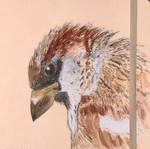 Sparrow head by archiwyzard
