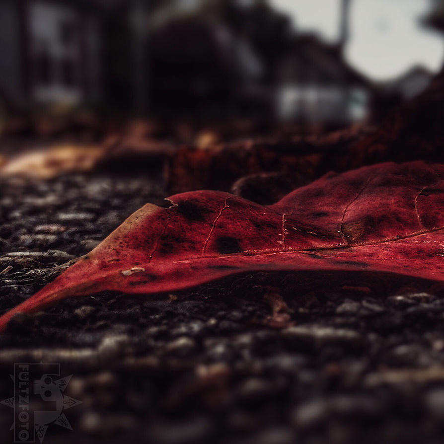 Autumn Rot by fultzfoto