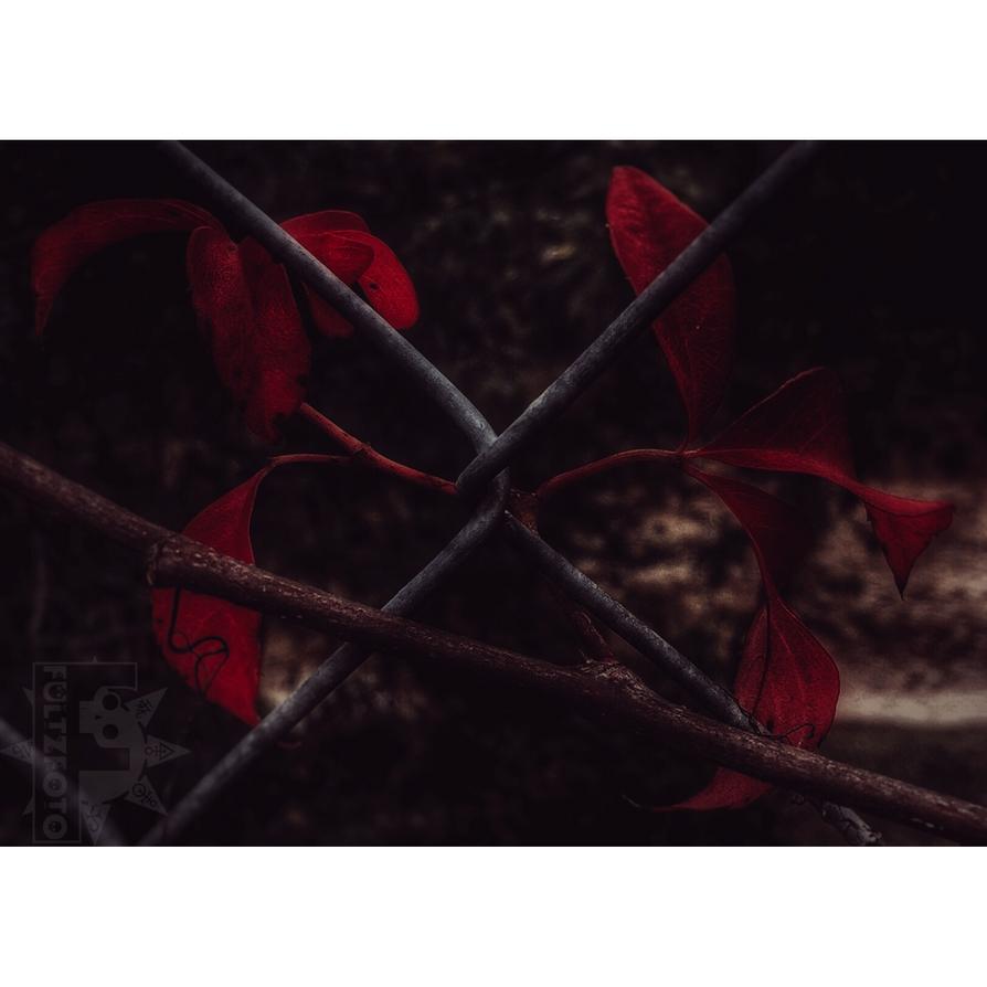 Bloodvine's Snare by fultzfoto