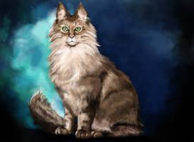 Cat study by Sappy-cat