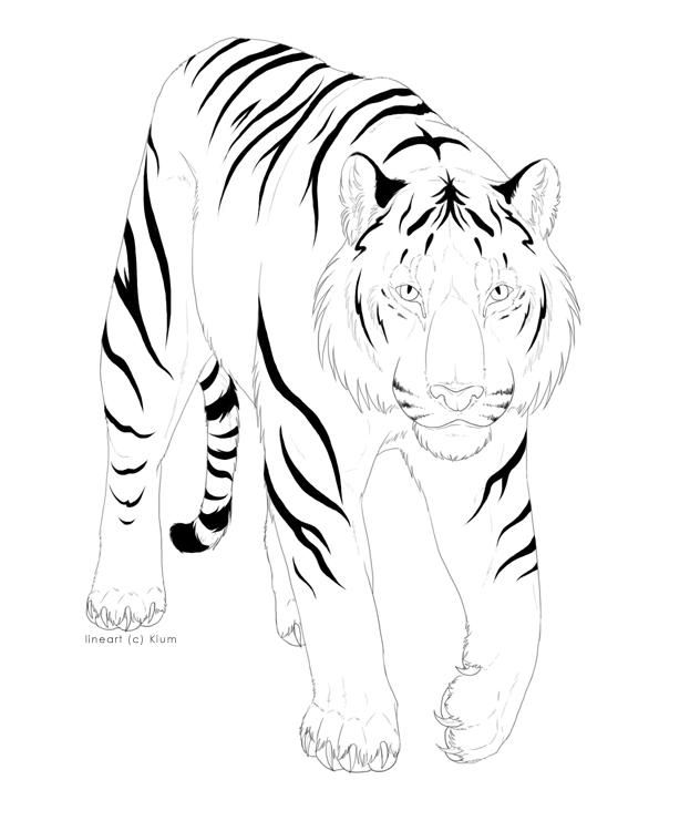 Line Art Tiger : White tiger line art