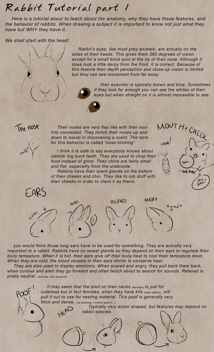 Rabbit Tutorial Part 1 by Kium
