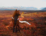 COM: Autumn Dreaming
