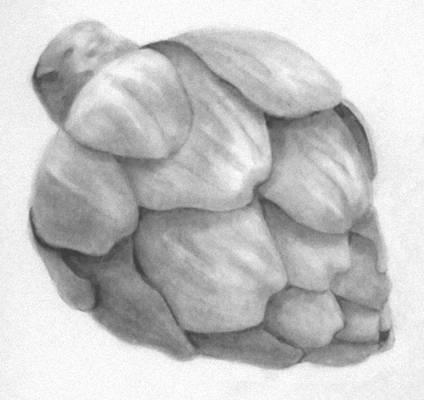 Artichoke in Graphite