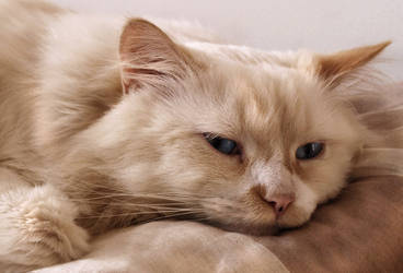 Portrait of Gustav by sinn-photos