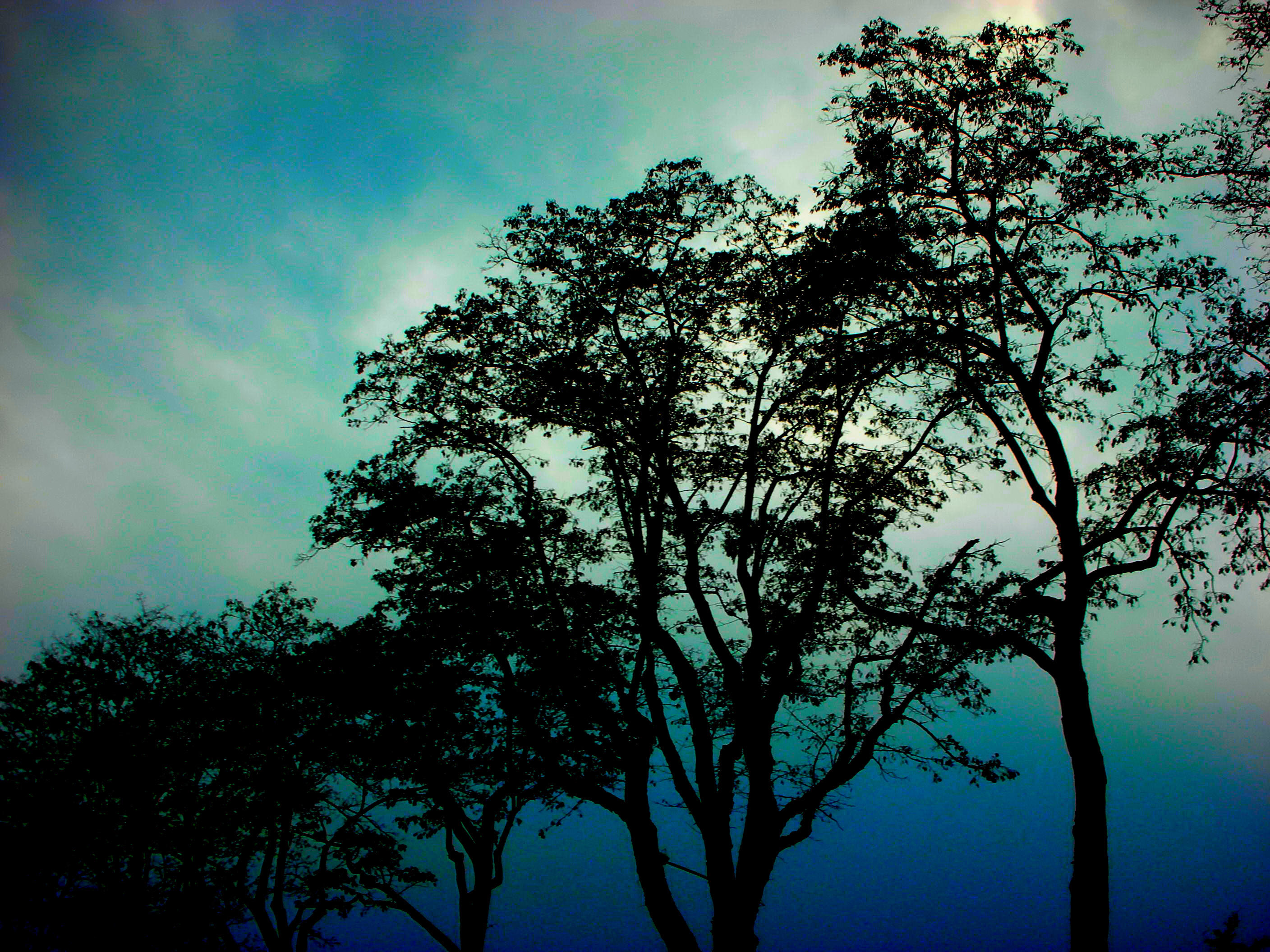 trees by m-l-o-d-a