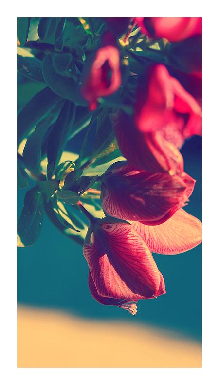 Flower by rinoatimber
