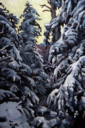 Sawteeth Mountain Pines by maccski
