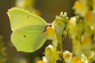 Halmstad Butterfly 4 by inckurei