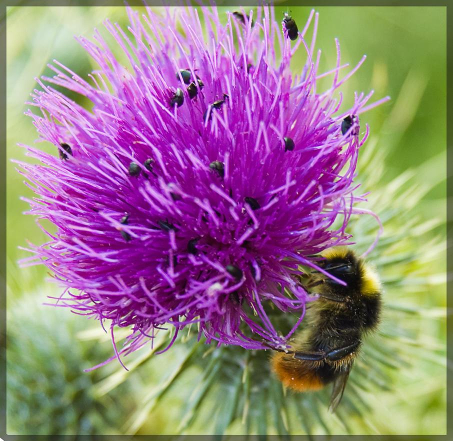 Bee Purple by MaxiiLS