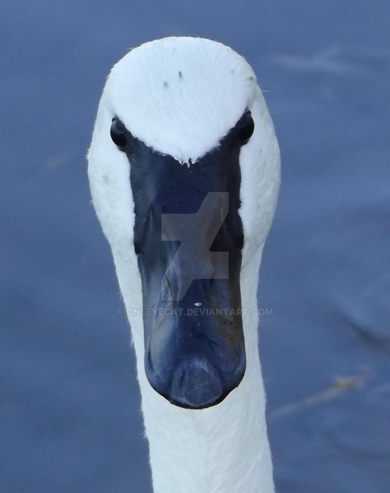 Swanface by Oneeyecat