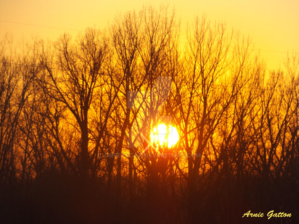 Golden Sky behind the trees by Oneeyecat