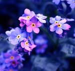 Happy Easter Forget me nots