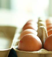eggs by ZoeWieZo
