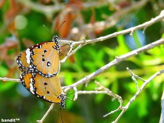 Butterfly, Make Love by banditperantau