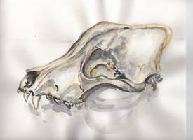 Wolf Skull by SeaAngel2133
