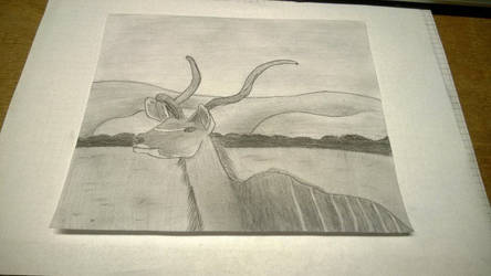 Drawn Realistic Kudo Antilope by rake0062