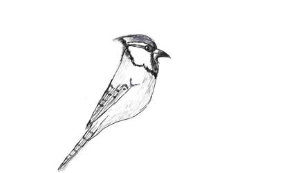 blujay Drawing experiment