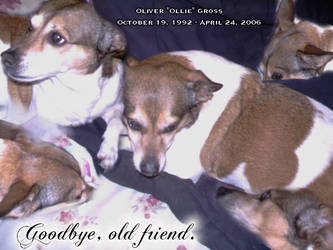 Tribute to Oliver