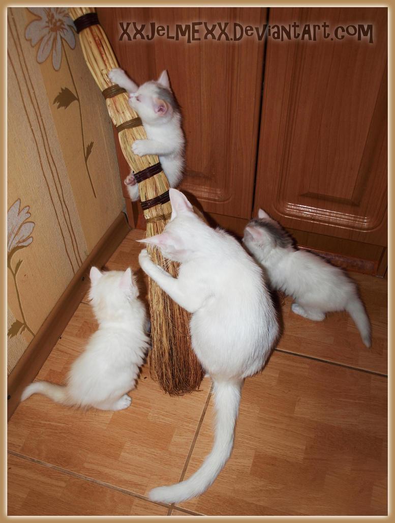 Cats loves venik pt.1 by byJelme