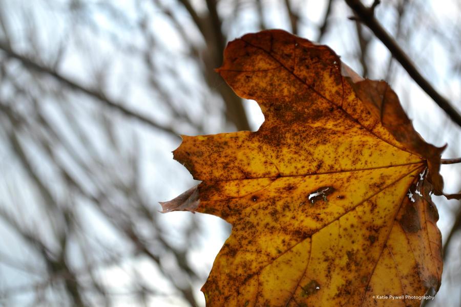 Autumn Colours by Lady---Vengeance