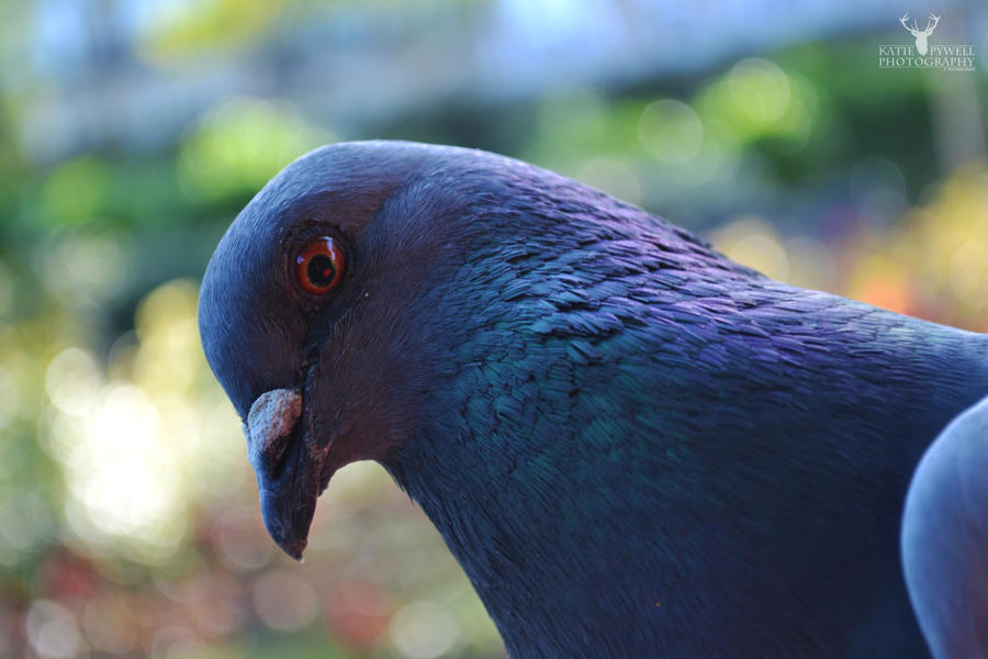 My Feathered Friend by Lady---Vengeance