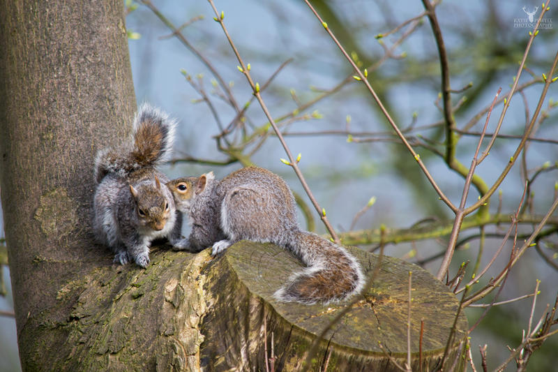 Squirrels In Spring by Lady---Vengeance