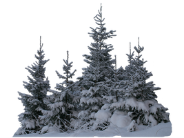 Wintery spruces 2 PNG - unrestricted stock by MariaLoikkii