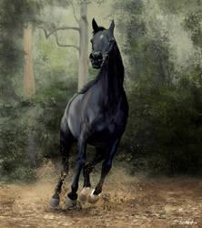 Equus by tonyhurst