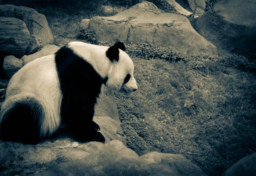 Panda by lennerose