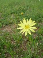 Flower by cyankali