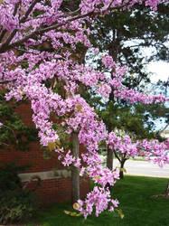 Blooming Tree 2 by cyankali