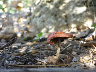 Mushroom by cyankali